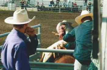 Back view of a cowboy on a steer, just being released from the pen