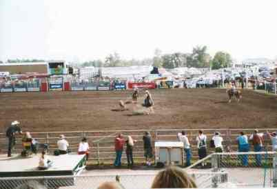 Steer roping, Mountain View County Fair and Rodeo, Olds