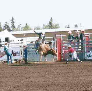 Fresh out of the pen: a cowboy on his bucking steer